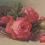 Роза 00169 150x150 - Цветы