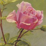 Роза 00172 150x150 - Цветы