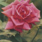 Роза 00174 150x150 - Цветы
