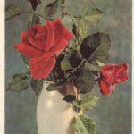 Роза 00176 150x150 - Цветы