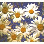 Ромашки 150x150 - Цветы