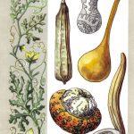 Самые крупные ягоды на Земле 150x150 - Удивительные растения