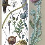 Семена путешественники 150x150 - Удивительные растения