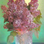 Сирень в вазе 150x150 - Цветы