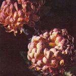 Сказка 150x150 - Цветы