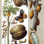 Сказочные плоды 150x150 - Удивительные растения