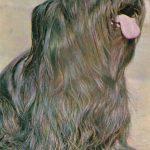 Скай терьер  150x150 - Другие животные