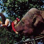 Слон  150x150 - Другие животные
