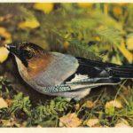 Сойка 150x150 - Птицы