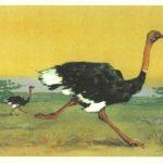 Страус 150x150 - Птицы