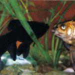 Телескопы 150x150 - Аквариумные рыбки