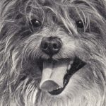 Тибетский терьер 1 150x150 - Собаки чёрно-белые