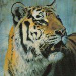 Тигр  150x150 - Другие животные