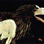Тихоокеанский орлан  150x150 - Другие животные