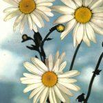Три ромашки 150x150 - Цветы