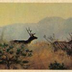 Тугайные олени  150x150 - Другие животные
