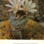 Турбиникарпус крупнокогтевой 150x150 - Цветы