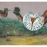 Турухтан 150x150 - Птицы
