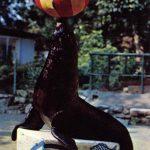 Тюлень  150x150 - Другие животные
