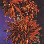 Уильям Сверд 150x150 - Цветы