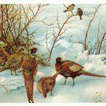 Фазаны 150x150 - Птицы