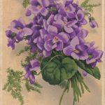 Фиалки 150x150 - Цветы