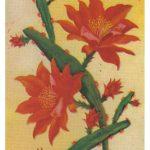 Филокактус 1 150x150 - Цветы