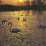 Фламинго 150x150 - Птицы