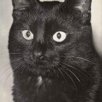 Фото Эриха Тылинека. Кошка № 002 150x150 - Кошки чёрно-белые