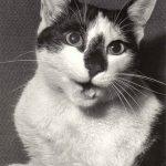 Фото Эриха Тылинека. Кошка № 007 150x150 - Кошки чёрно-белые