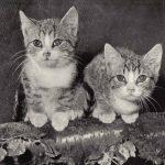 Фото Эриха Тылинека. Кошка № 009 150x150 - Кошки чёрно-белые