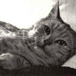 Фото Эриха Тылинека. Кошка № 012 150x150 - Кошки чёрно-белые