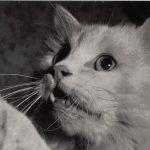 Фото Эриха Тылинека. Кошка № 016 150x150 - Кошки чёрно-белые