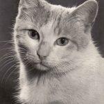Фото Эриха Тылинека. Кошка № 018 150x150 - Кошки чёрно-белые