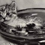 Фото Эриха Тылинека. Кошка № 019 150x150 - Кошки чёрно-белые