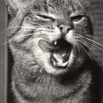 Фото Эриха Тылинека. Кошка № 023 150x150 - Кошки чёрно-белые