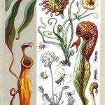 Хищные растения 150x150 - Удивительные растения