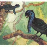 Хохлатый головач 150x150 - Птицы