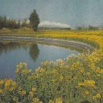 Цветущее поле сурепицы 150x150 - Пейзажи