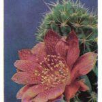 Цветущий кактус 1 150x150 - Цветы