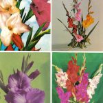 Цветы гладиолусов 005 008 150x150 - Цветы