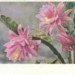 Цветёт кактус 150x150 - Цветы
