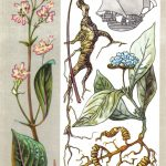 Целебные растения 150x150 - Удивительные растения