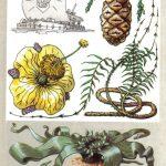 Чудо деревья 150x150 - Удивительные растения