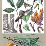 Чудсные соки растений 150x150 - Удивительные растения