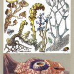 Чужеядные астения 150x150 - Удивительные растения