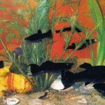 Чёрная молли 150x150 - Аквариумные рыбки