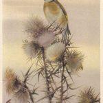 Щеглёнок 150x150 - Птицы