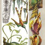 Эпифиты 150x150 - Удивительные растения