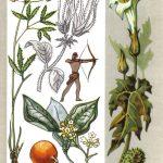 Ядовитые растения 150x150 - Удивительные растения